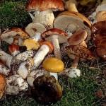 Рецепт супа из сушеных грибов, его полезные свойства