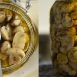 Вкусные рецепты закатки грибов на зиму