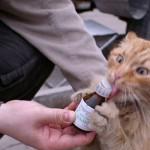 Валерьянка для кошек: опасности, подстерегающие владельца