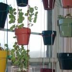 Выращиваем овощи на подоконнике
