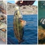 Ловись рыбка большая и маленькая: лучшие места для рыбалки в Крыму