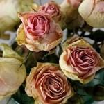 Как засушить цветы для гербария