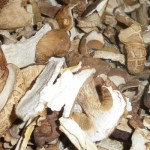 Сушеные белые грибы: рецепты приготовления блюд