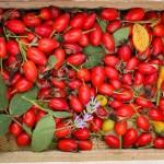Варим полезный компот из шиповника на зиму: рецепт с фото