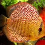 Поведение аквариумных рыбок