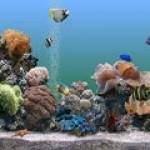 Как выбрать аквариумных рыбок?