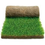 Как правильно сажать газонную траву весной – видео