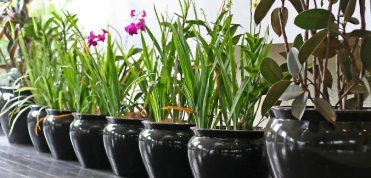 Der lunare kalender des umsteigens der zimmerpflanzen 2015 for Spezielle zimmerpflanzen