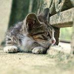 Пропала кошка: что делать?