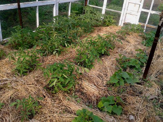 Что такое мульчирование травой