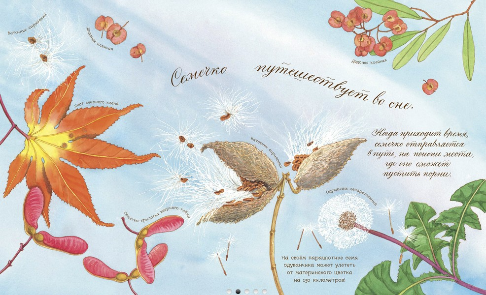 «Что снится семечку»: ботаника для самых маленьких