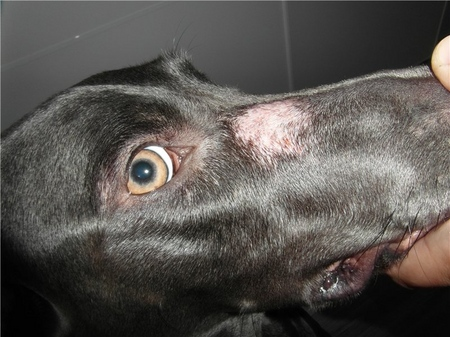У собаки выпадает шерсть: причины и лечение