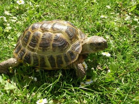 Виды черепах: о чем нужно помнить, прежде чем заводить?